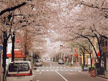 日本留学签证与就学签证区别